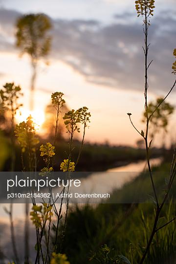 Evening light - p310m2184982 by Astrid Doerenbruch