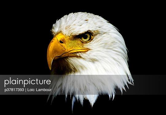 p37817393 von Loic Lambour
