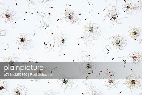 p719m2253960 by Rudi Sebastian