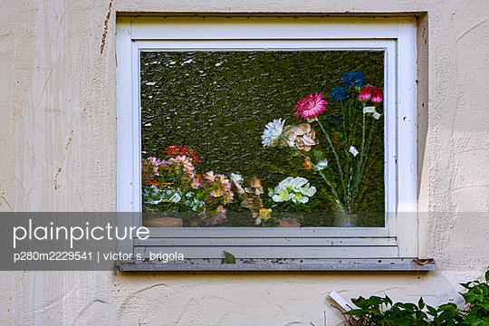 Flowers - p280m2229541 by victor s. brigola