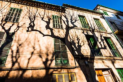 Schattenbaum - p488m1332485 von Bias