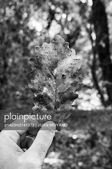Man with a dry leave in his hand on the woods in black and white - p1423m2141373 von JUAN MOYANO