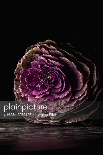 Ornamental cabbage - p1628m2230125 by Lorraine Fitch
