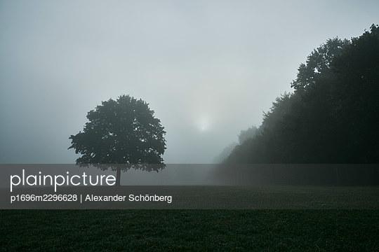 Tree in the meadow in the fog, City Park, Hamburg - p1696m2296628 by Alexander Schönberg