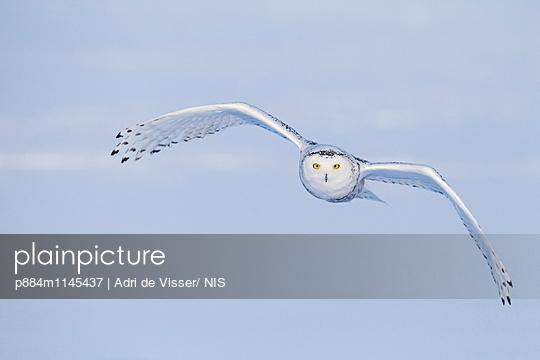 p884m1145437 von Adri de Visser/ NIS