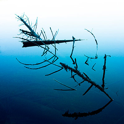 Dead branches into a lake. - p813m1000133 by B.Jaubert