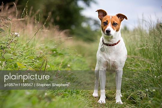 Freundlicher Hund - p1057m1158567 von Stephen Shepherd