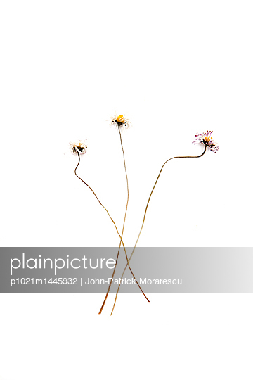 Blumen - p1021m1445932 von MORA