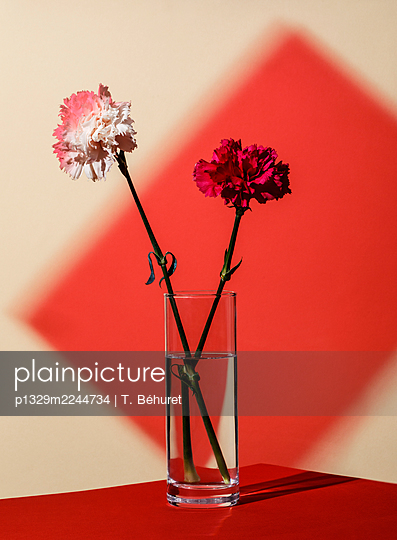 Carnations in a vase and plexiglass projection in the background - p1329m2244734 by T. Béhuret