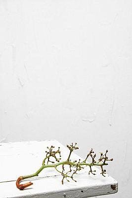 Aufgegessen - p2370819 von Thordis Rüggeberg