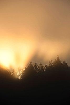 Sonnenlicht im Morgennebel - p533m970766 von Böhm Monika
