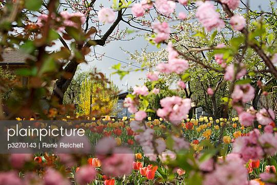 Flowerbed - p3270143 by René Reichelt