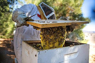 Beekeeper examining beehive in farm - p1166m1547294 by Cavan Social