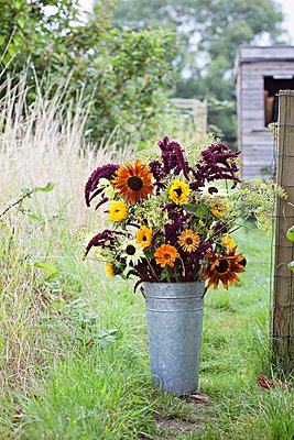 Flower bouquet in bucket at garden allotment - p429m1102935f by Kirstie Young Photography