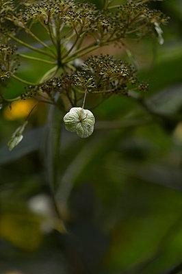 Herbst - p949m902548 von Frauke Schumann