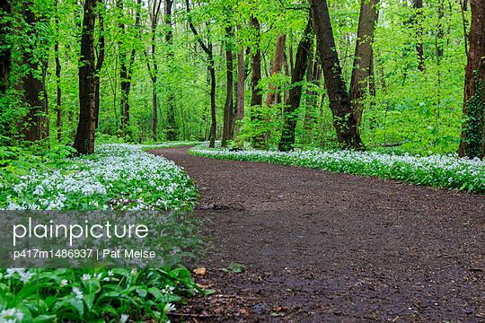 Waldweg - p417m1486937 von Pat Meise