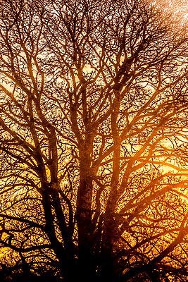 Goldenes Licht - p1057m2086625 von Stephen Shepherd