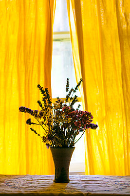 Flowers on windowsill next to yellow curtain - p1082m1586463 by Daniel Allan
