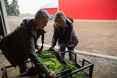 Female farmers with harvested vegetables in barn doorway - p1192m2109680 by Hero Images