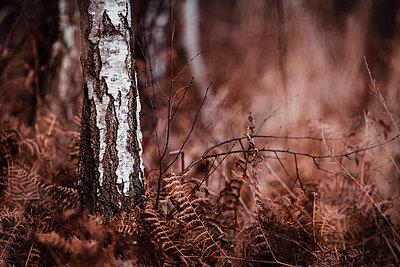 Birches in the dark - p1585m2283810 by Jan Erik Waider