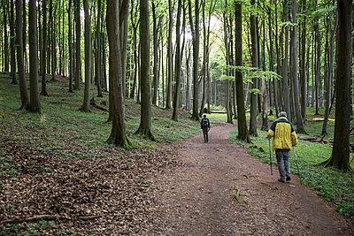 Germany, Mecklenburg-Western Pomerania, Ruegen, Jasmund National Park, hikers in beech forest on hiking trail - p300m2059282 von Maria Maar