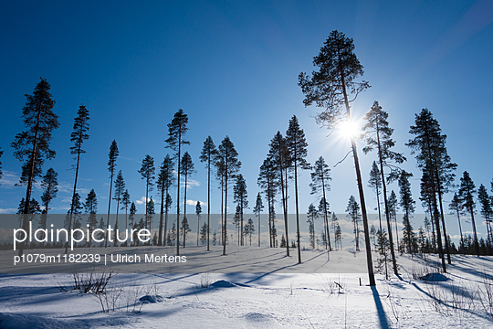 Finnische Winterlandschaft in Lapland - p1079m1182239 von Ulrich Mertens