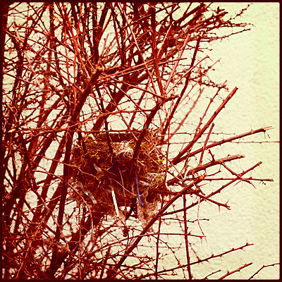Vogelnest - p3580607 von Frank Muckenheim