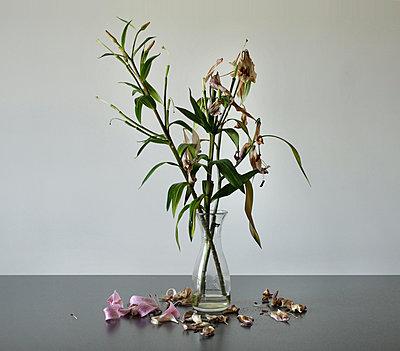 Schwertlilien - p1452m1514885 von Alessia Rollo