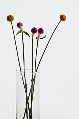 Bunch of Billybutton daisies and Gomphrena flowers in a vase - p30111061f by Halfdark