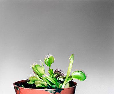 Fleischfressende Pflanze - p7810041 von Angela Franke