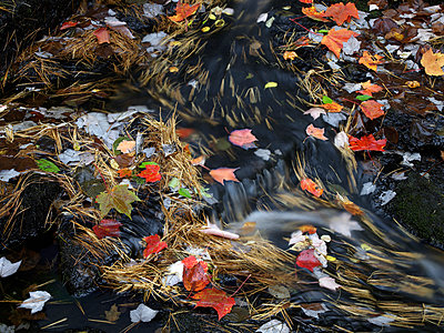 Leaves on Duck Brook, Acadia National Park, Maine - p884m1130703 by Tim Fitzharris