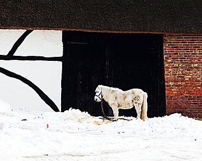 Einsames Pony - p1008m939781 von Valerie Schmidt