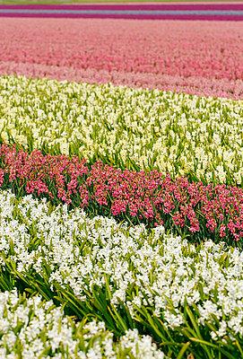 Blumenfelder - p4170013 von Pat Meise