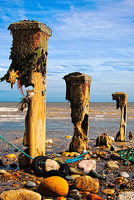 Remnants of mooring posts, Humberside, England - p4426838f by Design Pics