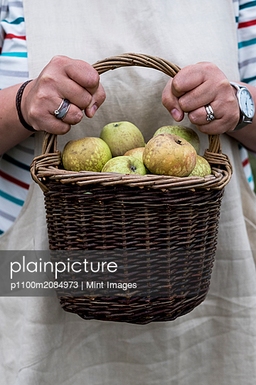 Close up of person holding brown wicker basket with freshly picked apples. - p1100m2084973 by Mint Images
