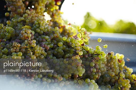 Grape harvest - p1145m951118 by Kerstin Lakeberg