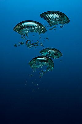 Air bubbles, underwater - p1652m2257795 by Callum Ollason
