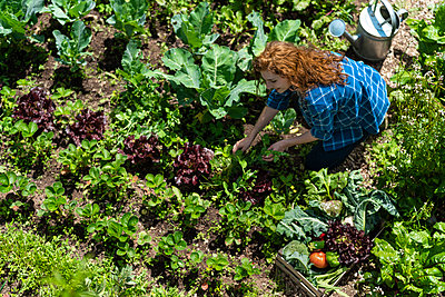 Woman harvesting vegetables in organic garden during sunny day - p300m2286830 by Steve Brookland