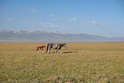 Kirgistan - p759m1207287 von Stefan Zahm