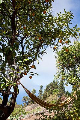 Orange tree - p958m1113155 by KL23