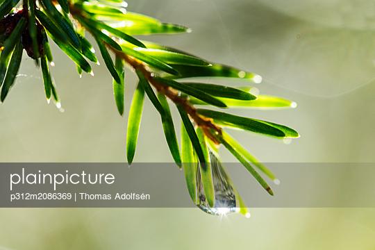 p312m2086369 von Thomas Adolfsén