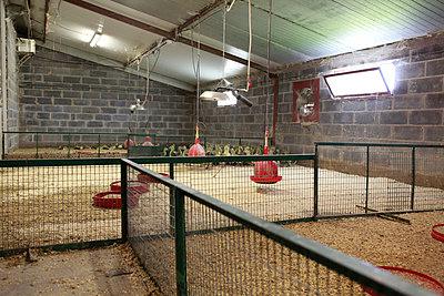 Tierhaltung - p1058m817150 von Fanny Legros