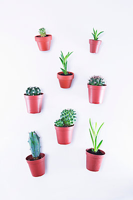 Small cacti and succulents - p1149m2027269 by Yvonne Röder