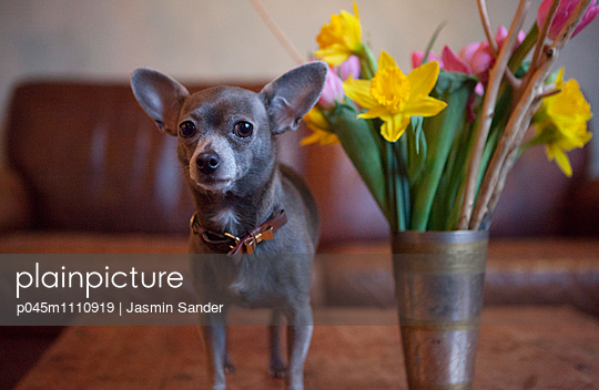 PET - p045m1110919 by Jasmin Sander