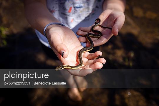 Snake on a hand, close-up - p756m2295391 by Bénédicte Lassalle