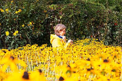 Deutschland, Frau im Sonnenblumenfeld - p817m2230501 von Daniel K Schweitzer