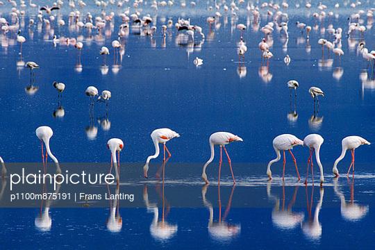 p1100m875191 von Frans Lanting