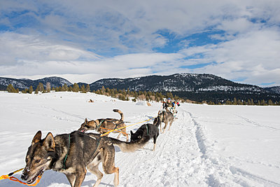 Woman dogsledding in snow against cloudy sky - p1166m1485611 by Cavan Images