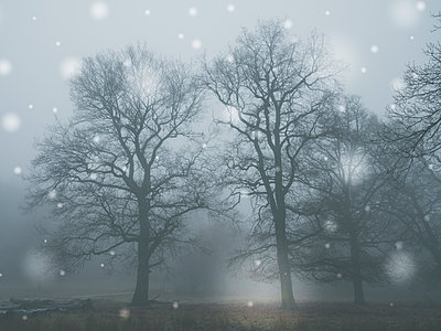 Winter landscape in the snowfall - p401m1216938 by Frank Baquet