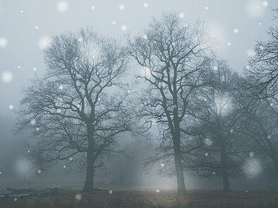 Winterlandschaft im Schneefall - p401m1216938 von Frank Baquet